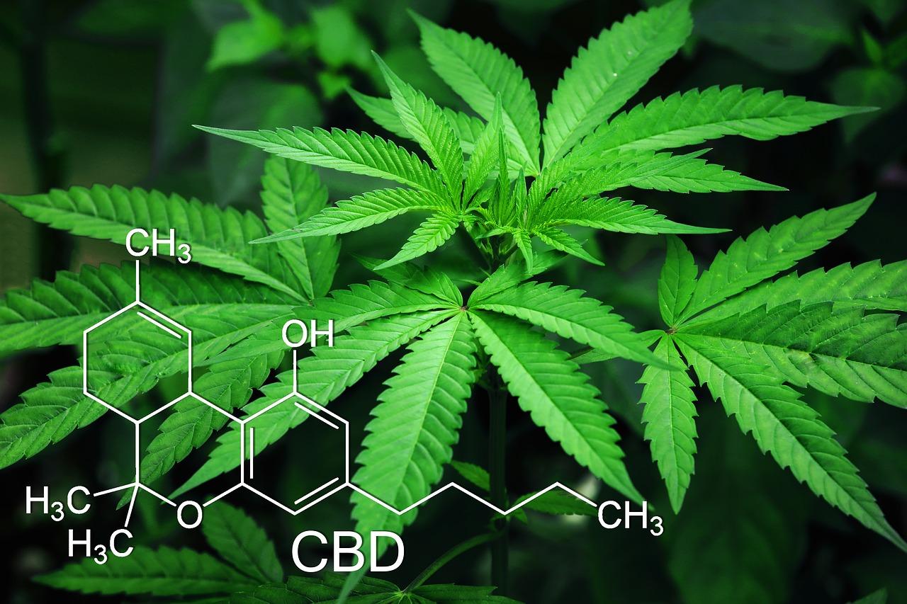 cannabis CBD legal en España